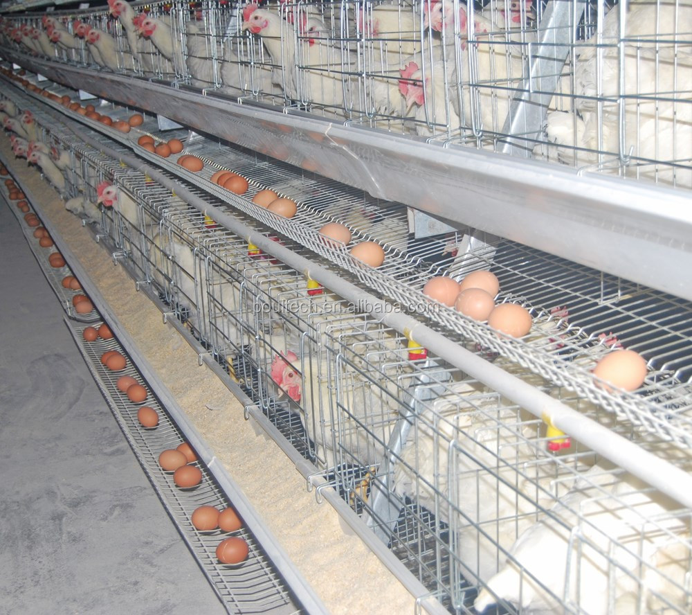 Poultry Farm A Frame Layer Cage System Of Poul-tech