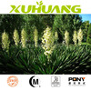 feed grade yucca extract powder /pure natural yucca /top quality yucca