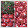 First class fresh red huaniu apple fruit in china in low price