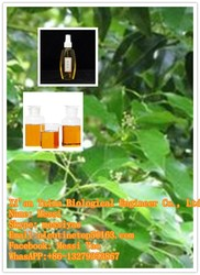 We hot sell high quality of Pure & Natural Camphor Oil Essential Oil