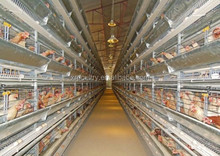 Long life hot galvanized battery cages for layers