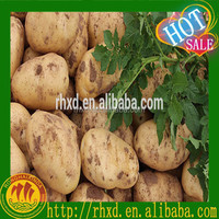 holland potatoes seeds from China