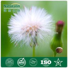 High quality Improve Liver function herb Dandelion P.E. manufacturer