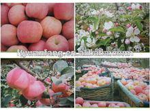 Tasty fresh red apple fruits containing potassium wholesale price