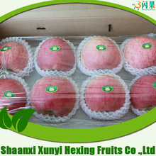 New Delicious Fresh chinese Fuji Apple Fruit Specification Export