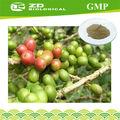grão de café verde extrato de ervas naturais para reduzir a pressão arterial