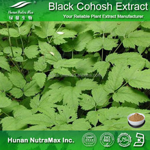 Top Quality Black Cohosh Powder,Cimicifuga Racemosa Powder,Actaea racemosa Powder