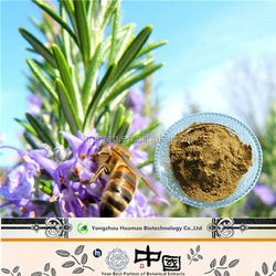 Supply Pure Natural Rosemary Leaf Extract Rosmarinic Acid Powder Herbal Antibiotic