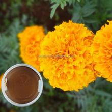 100% organic fruit exported marigold extract antioxidants benefits