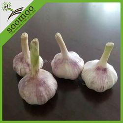 2015 new crop fresh garlic price
