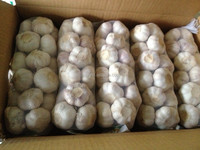 fresh garlic white/Normal white garlic/shandong jinxiang Garlic
