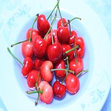 2015 Newell plastic fruit and vegetables for kids sakura cherry blossom teapot
