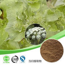 Hot sale Angelica Sinensis extract/Ferulic Acid 98%/Angelica powder/Enrich blood plant extract