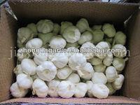 New crops fresh garlic 4.5cm-6.0cm