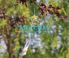 Bela flor wind chime