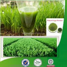 Natural & organic wheat grass juice powder with high quality, factory supply organic wheat grass powder