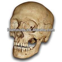 life-size PU Polyurethane foam human skull anatomical skull model