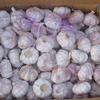china fresh red garlic with low price