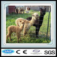 The best price wire fencing horses (factory exporter)