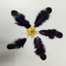 many color dyed yellow Reeves pheasant feather