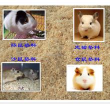Produce Maple & Birch Hamsters Pet Bedding Wood Shavings