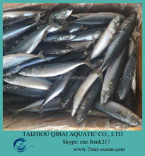 NEW LANDING FROZEN FISH PACIFIC MACKEREL SEA FROZEN 150-250G