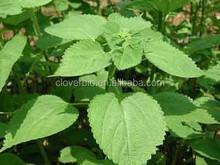 10:1 natural Ramie Root Extract Boehmeria nivea ( l..)gaud .