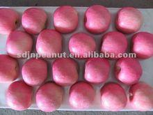 wholesale fresh red apple fruit