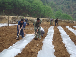 pe black mulch film Agricultural Mulching Film Used for Fruit, Flower and Vegetable