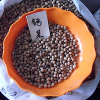 Gai guo zhong zi Wholesale chinese health seed for high purity for fruit seeds