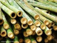 High Quality bamboo poles - cheap price For sale