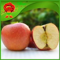 Chinese apple exporter fruit apple bulk fresh apple