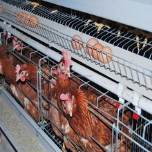 Chicke cage factory chicken cage equipment manufacturer for poultry farm