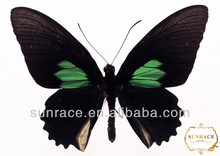 decoración de mariposas monarca peine del pelo