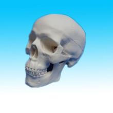 Unique handmade halloween skull white Resin human skull