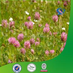 red clover powder extract formononetin 485-72-3