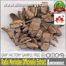 natural herb extract powder morinda officinalis how extract/radix moridae officinallsextract 10:1 $zhanwei$