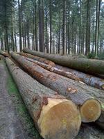 European Hemlock log sawn timber and Lumber KD - S4S Grade and European Logs