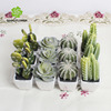 silk flower wedding deocrative artificial flower soft plastic potted desert plant home decotation flowers