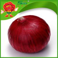 Fresh onions export to Dubai
