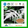 Manufacturer supply Pure Natural Black Cohosh extract powder 2.5% Triterpene Glycosides