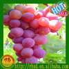 red globe seedless grape with factory best price export