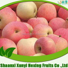 shaanxi bulk fresh new crop china fresh fruit apple gala fuji