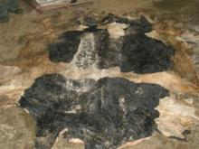 Dairy cow hide