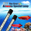 Arowana dedicated dive light