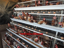 TAIYU Chicken Cages for Kenya Hen Farm (Local agent, whole year stock, visit customers every year)