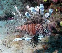 All Kinds Of Ornamental Fish From Sri Lanka