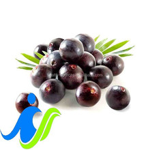 Acai Berry Extract Powder can Enhanced Mental Health