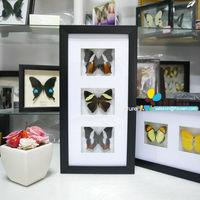 FOUSEN(023 Mounting Service ) 18*35*3cm Black PS Framed Naturals Decoration