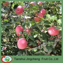 Fresh fuji apple fruit